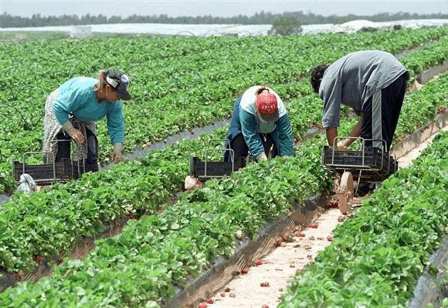 Locuri de muncă în domeniul agricol în Spania
